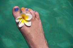 Κλείστε επάνω στο γυμνό πόδι γυναικών με το λουλούδι frangipani Στοκ Εικόνες