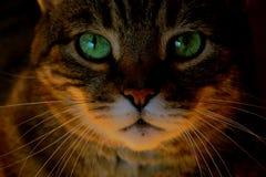 Κλείστε επάνω τα πράσινα μάτια προσώπου γατών Στοκ Φωτογραφία