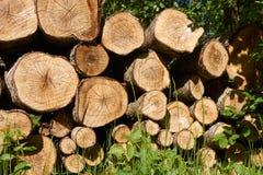 Κλείστε επάνω την άποψη ενός σωρού του κομμένου δέντρου οι κορμοί που συσσωρεύονται επάνω σε έναν σωρό στοκ εικόνα