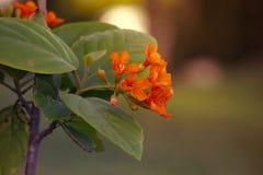 Κλείστε επάνω την άποψη του πορτοκαλιού λουλουδιού Στοκ Φωτογραφίες
