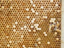 Κλείστε επάνω την άποψη των μελισσών εργασίας στα κύτταρα στοκ φωτογραφία