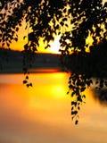 Κλείστε επάνω την αναδρομικά φωτισμένη σκιαγραφία φύλλων Στοκ φωτογραφία με δικαίωμα ελεύθερης χρήσης