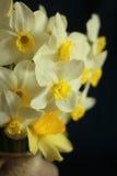 Κλείστε επάνω την ανθοδέσμη των daffodils στο βάζο στο μαύρο υπόβαθρο Στοκ εικόνες με δικαίωμα ελεύθερης χρήσης