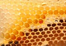 Κλείστε επάνω την εικόνα της κυψέλης μελισσών Στοκ εικόνες με δικαίωμα ελεύθερης χρήσης