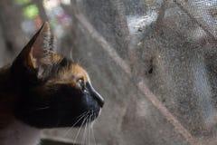 Κλείστε επάνω την επικεφαλής γάτα κοιτάζοντας έξω για κάτι Στοκ Φωτογραφία