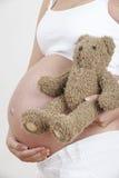 Κλείστε επάνω της εκμετάλλευσης Teddy εγκύων γυναικών αντέχει Στοκ Φωτογραφία