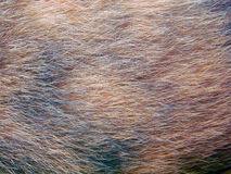 Κλείστε επάνω της ζωικής γούνας στοκ φωτογραφία με δικαίωμα ελεύθερης χρήσης