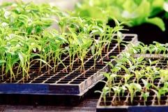 Κλείστε επάνω της συγκομιδής σαλάτας που τοποθετείται στα πεδία Στοκ εικόνες με δικαίωμα ελεύθερης χρήσης