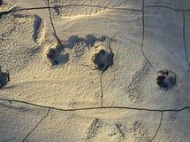 Κλείστε επάνω της τυπωμένης ύλης ποδιών σκυλιών Στοκ φωτογραφία με δικαίωμα ελεύθερης χρήσης