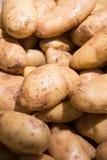 Κλείστε επάνω της φρέσκιας πατάτας Στοκ φωτογραφία με δικαίωμα ελεύθερης χρήσης