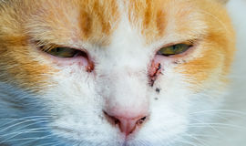 Κλείστε επάνω τη γάτα πορτρέτου Στοκ φωτογραφία με δικαίωμα ελεύθερης χρήσης