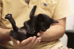 Κλείστε επάνω τη μαύρη λαβή γατακιών με το χέρι Στοκ Εικόνες