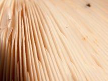 Κλείστε επάνω τη σύσταση και το ευθυγραμμισμένο σχέδιο underside μιας άγριας MU Στοκ φωτογραφία με δικαίωμα ελεύθερης χρήσης