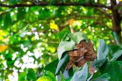 Κλείστε επάνω τη φωλιά με το φύλλο στο μουτζουρωμένο υπόβαθρο bokeh δέντρων στον κήπο φύλλο σε έναν τομέα με τα φύλλα Χρησιμοποίη στοκ εικόνα με δικαίωμα ελεύθερης χρήσης