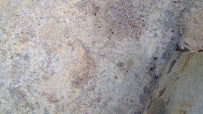 Κλείστε επάνω τη φωλιά μυρμηγκιών στο περιβάλλον φύσης απόθεμα βίντεο