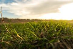 κλείστε επάνω τη χλόη στο έδαφος για το υπόβαθρο φύσης με τον ήλιο καθορισμένο ligh Στοκ Φωτογραφία