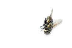 Κλείστε επάνω τις νεκρές μύγες Στοκ φωτογραφίες με δικαίωμα ελεύθερης χρήσης
