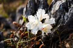 Κλείστε επάνω του άγριου λουλουδιού Στοκ Φωτογραφίες