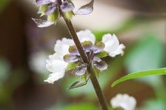 κλείστε επάνω του άσπρου υποβάθρου λουλουδιών Στοκ Εικόνα