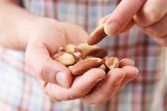 Κλείστε επάνω του ατόμου που τρώει το υγιές πρόχειρο φαγητό των καρυδιών της Βραζιλίας Στοκ Φωτογραφία