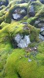 Κλείστε επάνω του βρύου κάλυψε τους βράχους Στοκ εικόνες με δικαίωμα ελεύθερης χρήσης