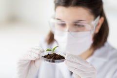 Κλείστε επάνω του επιστήμονα με τις εγκαταστάσεις και του χώματος στο εργαστήριο στοκ εικόνα με δικαίωμα ελεύθερης χρήσης