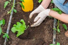 Κλείστε επάνω του θηλυκού χύνοντας χώματος εργαζομένων κήπων Στοκ Εικόνες
