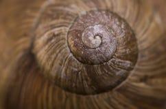Κλείστε επάνω του κοχυλιού σαλιγκαριών Στοκ φωτογραφίες με δικαίωμα ελεύθερης χρήσης