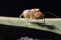 Κλείστε επάνω του κόκκινου μυρμηγκιού στη φύση στοκ φωτογραφίες με δικαίωμα ελεύθερης χρήσης