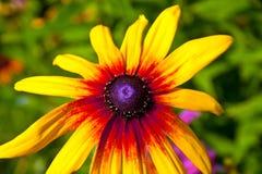 Κλείστε επάνω του κόκκινου υποβάθρου λουλουδιών Στοκ φωτογραφία με δικαίωμα ελεύθερης χρήσης