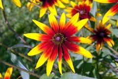 Κλείστε επάνω του κόκκινου υποβάθρου λουλουδιών Στοκ Εικόνες