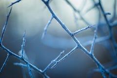 Κλείστε επάνω του μαραμένου κλαδίσκου δέντρων με την πάχνη Στοκ εικόνα με δικαίωμα ελεύθερης χρήσης