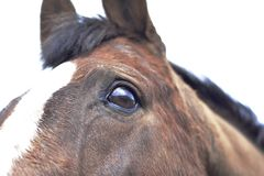 Κλείστε επάνω του ματιού και του κεφαλιού ενός αλόγου Στοκ φωτογραφία με δικαίωμα ελεύθερης χρήσης