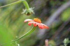 Κλείστε επάνω του πορτοκαλιού λουλουδιού Στοκ φωτογραφία με δικαίωμα ελεύθερης χρήσης