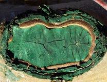 Κλείστε επάνω του πρόσφατα κλαδευμένου και προστατευμένου κλάδου δέντρων μηλιάς Στοκ Φωτογραφίες