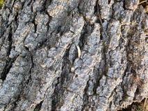 Κλείστε επάνω του φλοιού δέντρων Στοκ Εικόνες