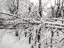 Κλείστε επάνω το δέντρο που καλύπτεται από το χιόνι Στοκ φωτογραφίες με δικαίωμα ελεύθερης χρήσης