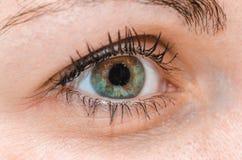 Κλείστε επάνω το ανθρώπινο ακραίο μακρο πράσινο μάτι με το φυσικό eyelash Στοκ φωτογραφία με δικαίωμα ελεύθερης χρήσης