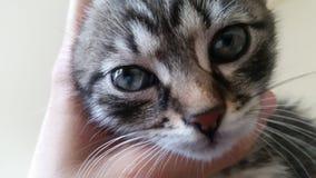 Κλείστε επάνω το γατάκι Στοκ φωτογραφίες με δικαίωμα ελεύθερης χρήσης