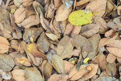 Ζωηρόχρωμα φύλλα φθινοπώρου Στοκ φωτογραφία με δικαίωμα ελεύθερης χρήσης