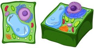 Κλείστε επάνω το διάγραμμα του κυττάρου φυτών απεικόνιση αποθεμάτων