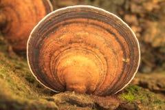 Κλείστε επάνω το μανιτάρι στο βαθύ δάσος Στοκ φωτογραφία με δικαίωμα ελεύθερης χρήσης