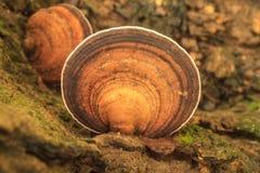 Κλείστε επάνω το μανιτάρι στο βαθύ δάσος Στοκ εικόνα με δικαίωμα ελεύθερης χρήσης