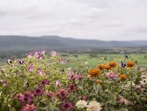 Κλείστε επάνω το λουλούδι και το υπόβαθρο άποψης Στοκ Φωτογραφίες