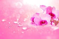 Κλείστε επάνω το λουλούδι ορχιδεών με τις πτώσεις νερού βροχής στο ρόδινο ρωμανικό αβ Στοκ φωτογραφία με δικαίωμα ελεύθερης χρήσης