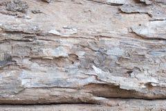Κλείστε επάνω το παλαιό υπόβαθρο δέντρων φλοιών ξύλινο ξύλινες λεπτομέρειες σύστασης ρυτίδων Στοκ Εικόνες