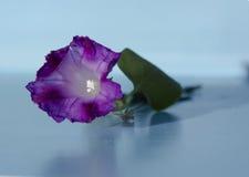Κλείστε επάνω το πορφυρό λουλούδι Στοκ εικόνα με δικαίωμα ελεύθερης χρήσης