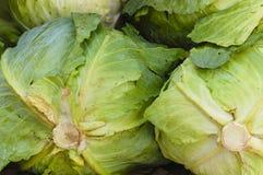 Κλείστε επάνω το πράσινο μαρούλι Στοκ Φωτογραφίες