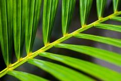 Κλείστε επάνω το πράσινο φύλλο Στοκ εικόνα με δικαίωμα ελεύθερης χρήσης