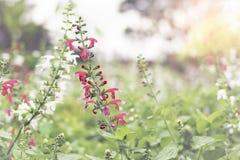 Κλείστε επάνω το υπόβαθρο λουλουδιών Στοκ Εικόνα
